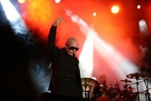 Pitbull noticia web